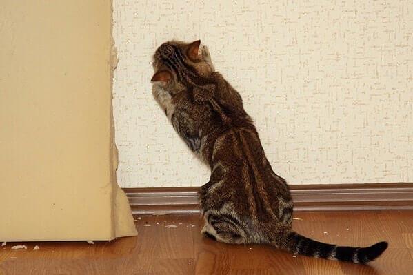 Домашние животные нередко становятся причиной испорченных обоев
