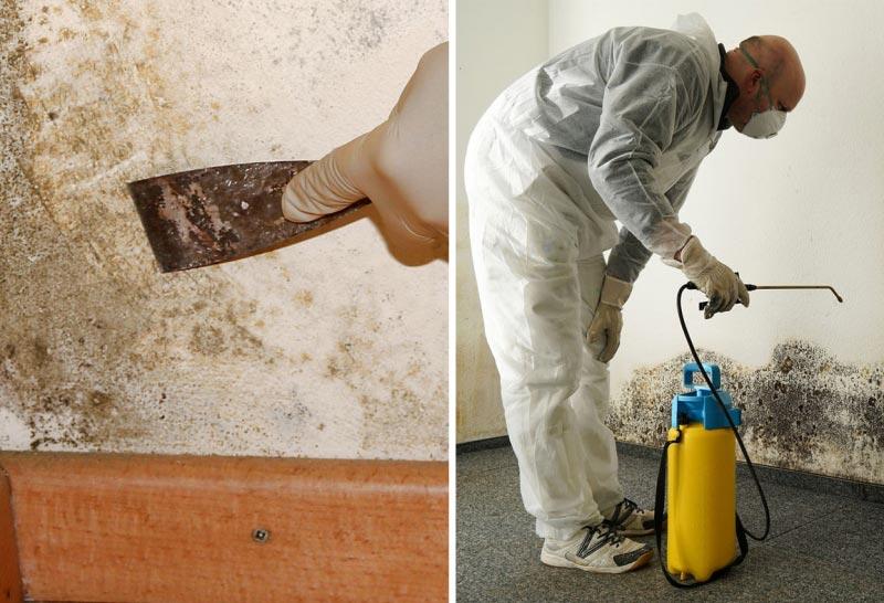 Этапы обработки стен от плесени и грибка